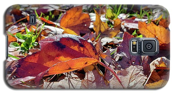 Carpet Of Fall Colors Galaxy S5 Case