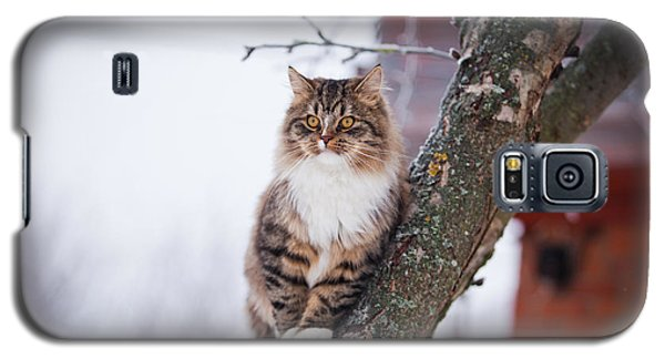 Cold Galaxy S5 Case - Cat Outdoors In The Winter Is On The by Dezy