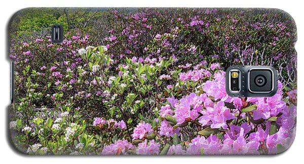 Catawba Rhododendron Table Rock  Galaxy S5 Case
