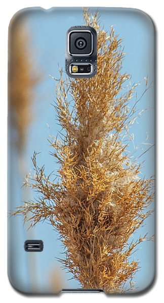Cattail  Galaxy S5 Case