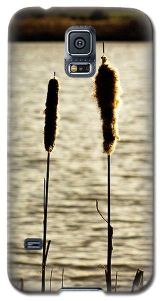 Cattails In The Sun Galaxy S5 Case