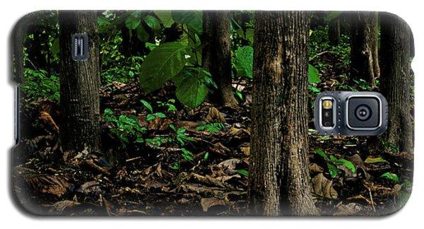 Cedar Trees Galaxy S5 Case