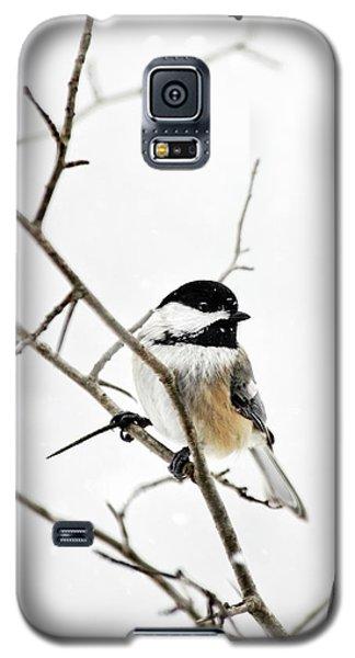 Charming Winter Chickadee Galaxy S5 Case