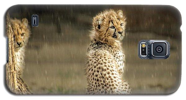 Cheetah Cubs And Rain 0168 Galaxy S5 Case