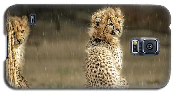 Cheetah Cubs And Rain 0168 Galaxy S5 Case