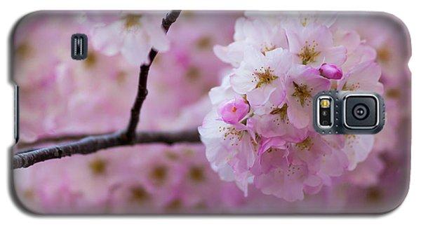 Cherry Blossom 8624 Galaxy S5 Case