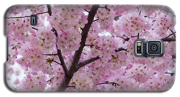 Cherry Blossoms 8611 Galaxy S5 Case