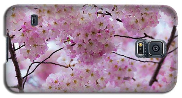 Cherry Blossoms 8625 Galaxy S5 Case