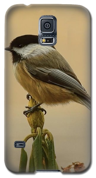 Chickadee On Rhododendron Galaxy S5 Case