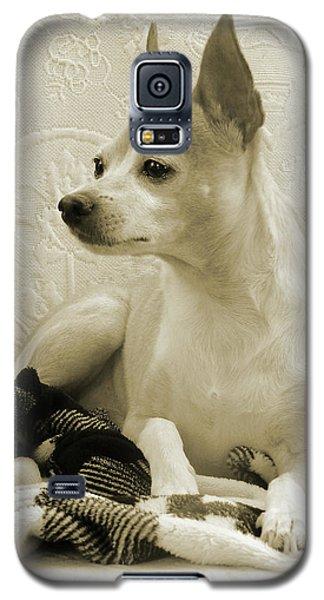 Chihuahua Chiqui  Portrait  Galaxy S5 Case