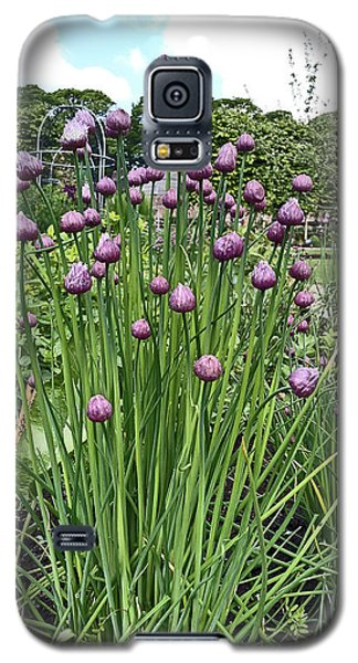 Chorley. Astley Hall. Walled Garden Chive Flowers. Galaxy S5 Case