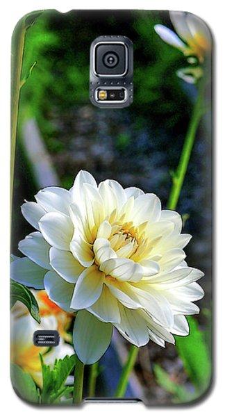 Chrysanthemum In Bloom Galaxy S5 Case