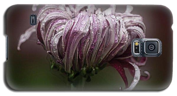 Chrysanthemum 'lily Gallon' Galaxy S5 Case