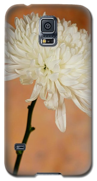 Chrysanthemum On Canvas Galaxy S5 Case