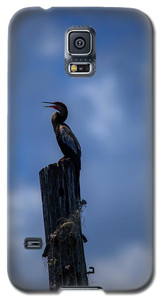 Cinematic Looking Anhinga Galaxy S5 Case