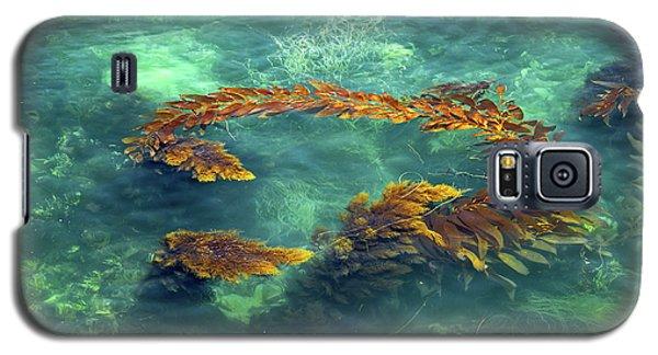 Circle Of Glistening Seaweed Galaxy S5 Case