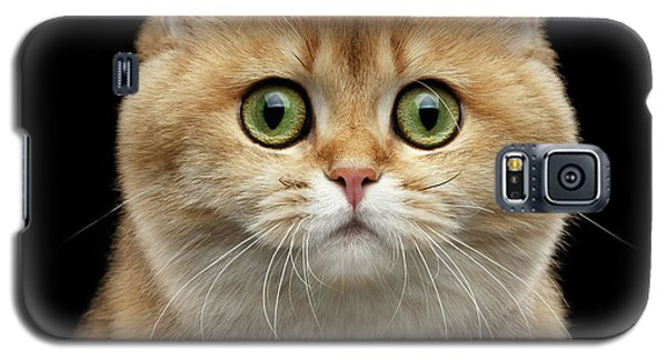 Close-up Portrait Of Golden British Cat With Green Eyes Galaxy S5 Case