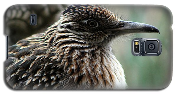 Closeup Of Road Runner By Dragon In Palm Desert Galaxy S5 Case
