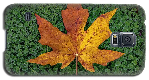 Clover Leaf Autumn Galaxy S5 Case