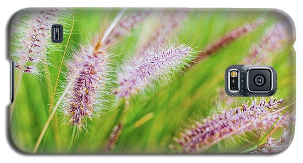 Colorful Flowers In Purple Spikes, Purple Fountain Grass, Close- Galaxy S5 Case