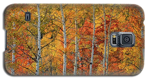 Colorful Glow Of Autumn Galaxy S5 Case