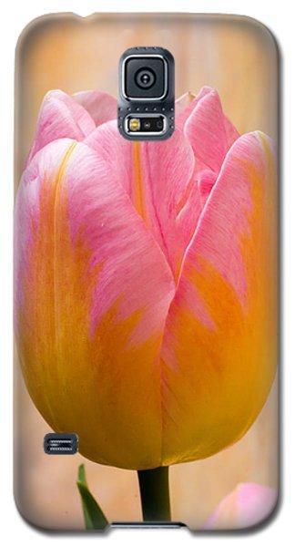 Colorful Tulip Galaxy S5 Case