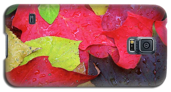 Colors Of Fall Galaxy S5 Case
