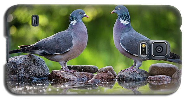 Common Wood Pigeons Meeting At The Waterhole Galaxy S5 Case