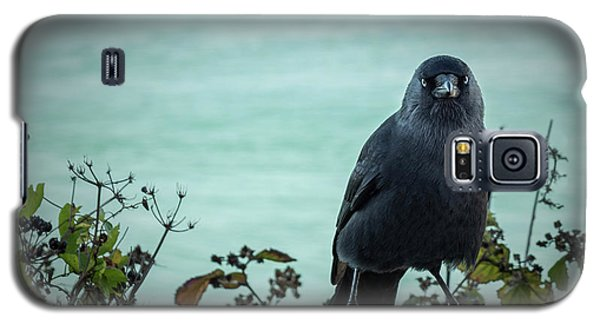 Cornish Crow Galaxy S5 Case
