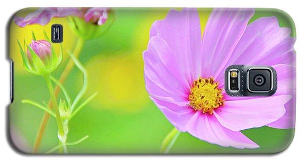 Cosmos Flower In Full Bloom, Bud Galaxy S5 Case