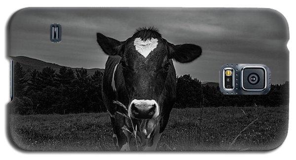 Cow Galaxy S5 Case