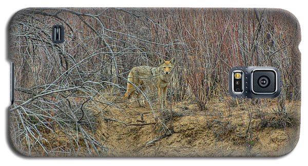 Coyote In The Brush Galaxy S5 Case