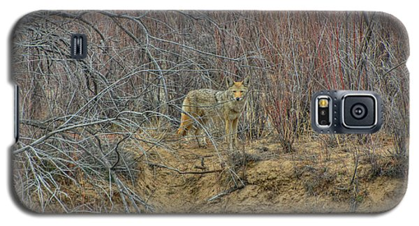 Galaxy S5 Case featuring the photograph Coyote In The Brush by Britt Runyon