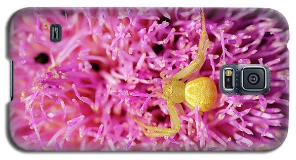 Crab Spider Galaxy S5 Case
