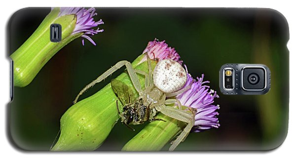 Crab Spider With Bee Galaxy S5 Case