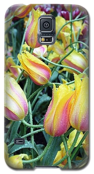 Crazy Tulips Galaxy S5 Case