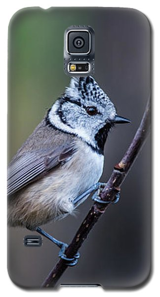 Crested Tit On A Twig Galaxy S5 Case