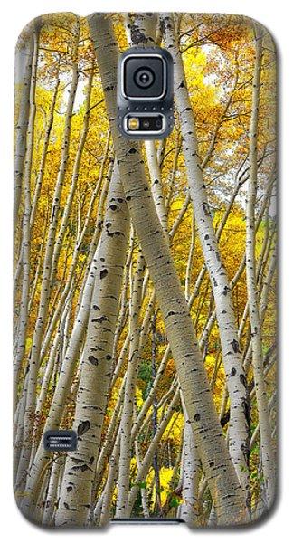 Crossed Aspens Galaxy S5 Case
