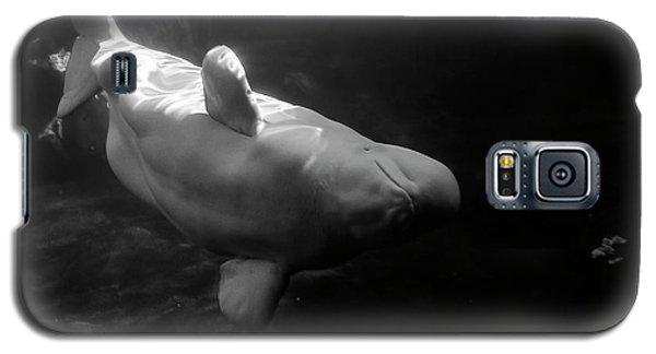 Curious Beluga Galaxy S5 Case