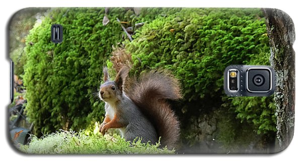 Curious Squirrel Galaxy S5 Case