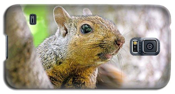Cute Funny Head Squirrel Galaxy S5 Case