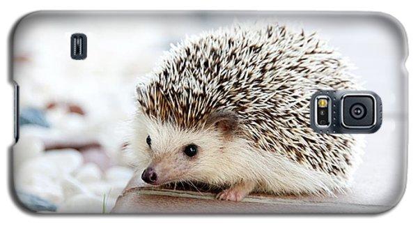 Cute Hedgeog Galaxy S5 Case