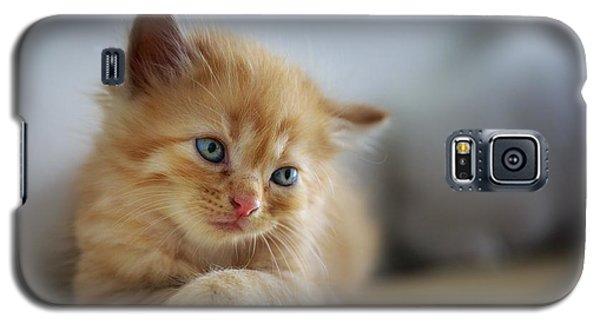 Cute Orange Kitty Galaxy S5 Case