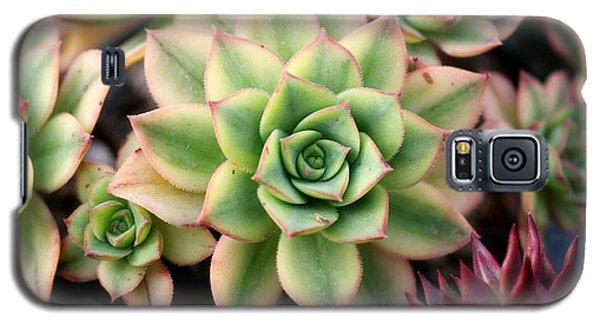 Cute Succulent Galaxy S5 Case