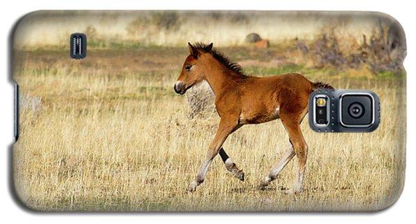 Cute Wild Bay Foal Galloping Across A Field Galaxy S5 Case