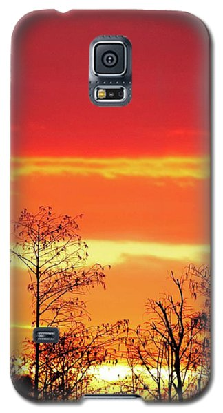 Cypress Swamp Sunset 5 Galaxy S5 Case