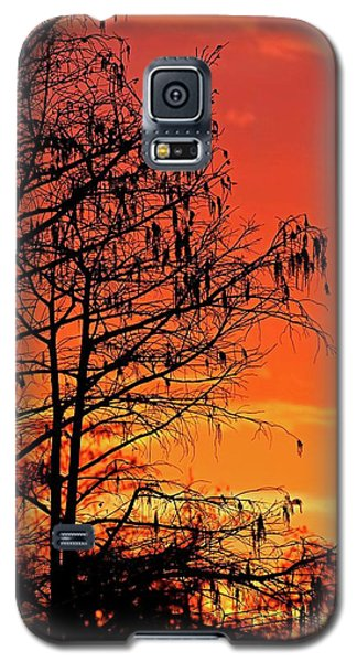 Cypress Swamp Sunset Galaxy S5 Case