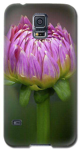 Dahlia 'mingus Phillip Sr' Galaxy S5 Case