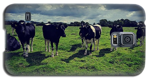 Dairy Heifers Galaxy S5 Case