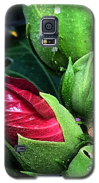 Dalton Galaxy S5 Case